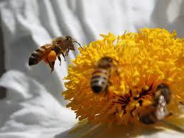 ENVIRONS_BEES