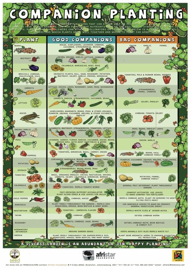 GARDEN_COMPANION-PLANTS