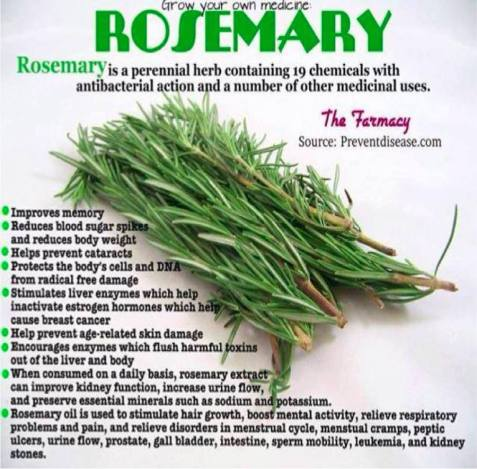 HEALTH_ROSEMARY-GOODS
