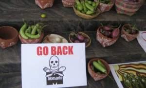 ENVIRONS_INDIA-NO-GMO