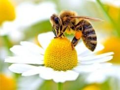 ENVIRONS_BEES-HARMED